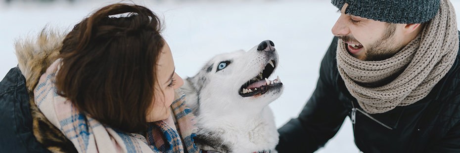 couple-laughing-with-husky-dog