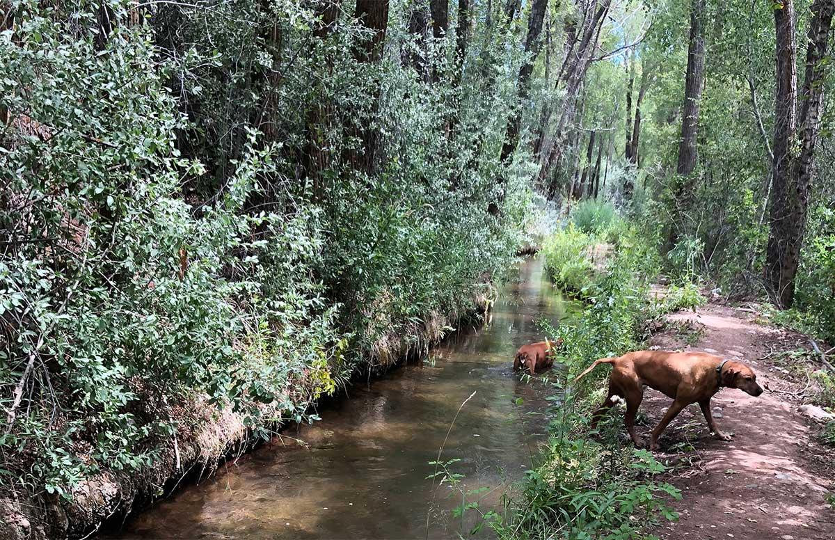 pathways-dogs