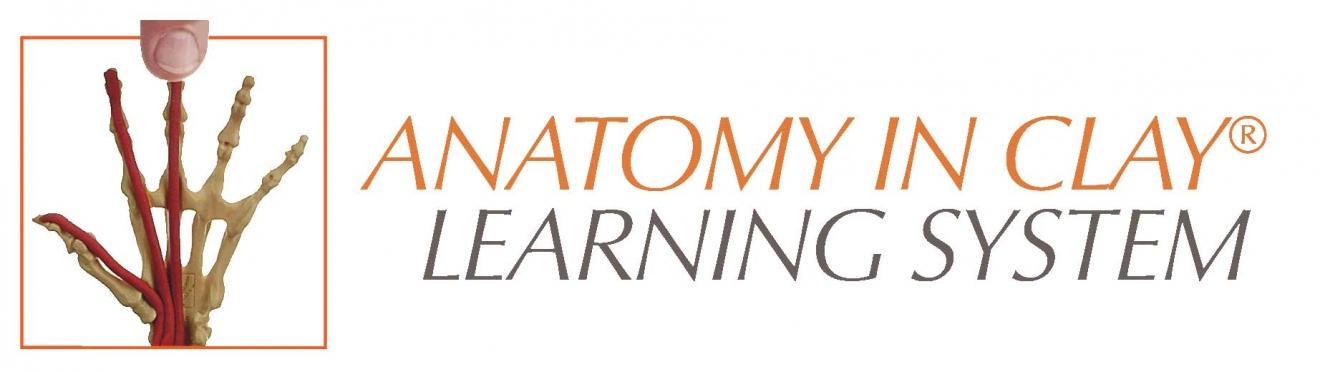 anotomyclay-logo