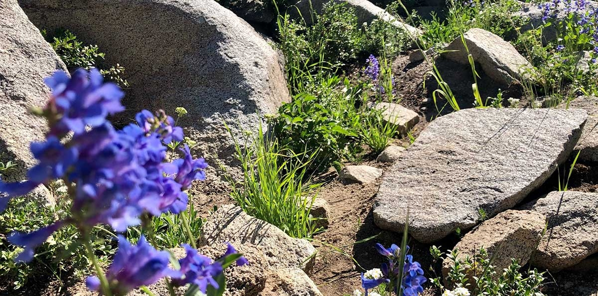pathways-flowers