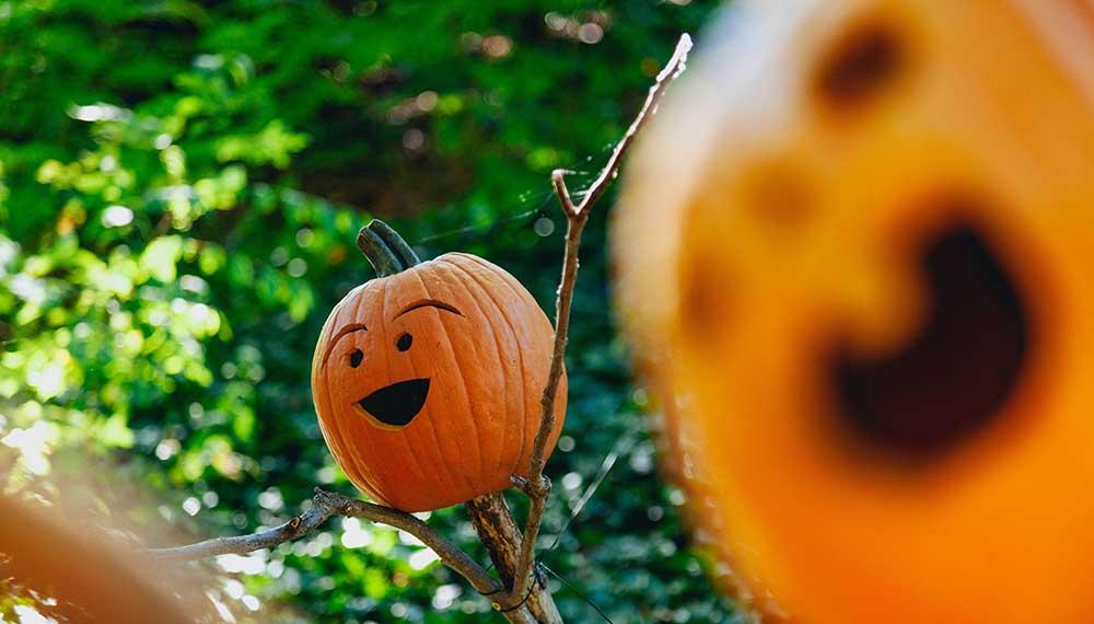 pathways-pumpkin